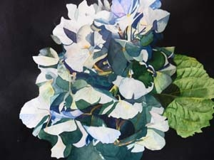 """A Moment at Dusk the Blue Hydrangea"""