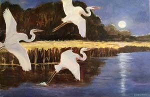 """Egrets in Everglades"""